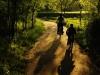 viajando-entre-bosques